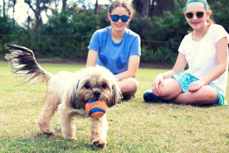 Puppy Park