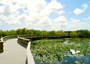 The Best Hiking Trails on the Treasure Coast Harbour Ridge style=