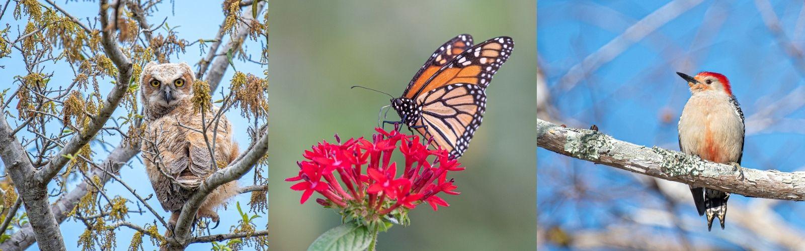 Meet Lois Fraser- Your Resident Nature Photographer
